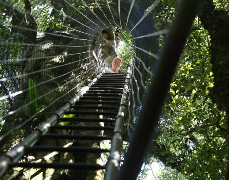 O'Reilly's Rainforest Retreat - QLD
